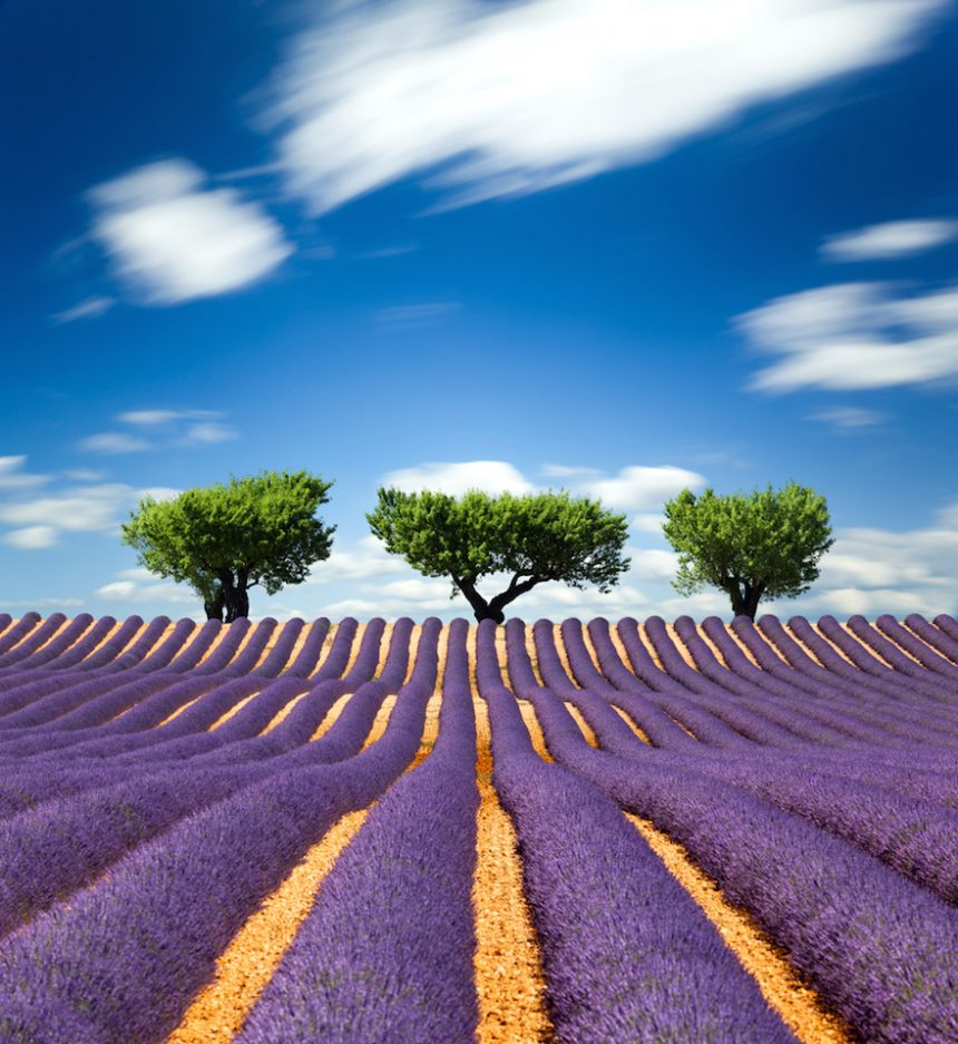 10 Of The Most Spectacular Flower Fields In The World